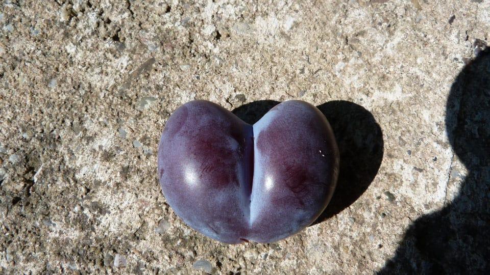 Nachhaltige Ernte mit Liebe zum Details